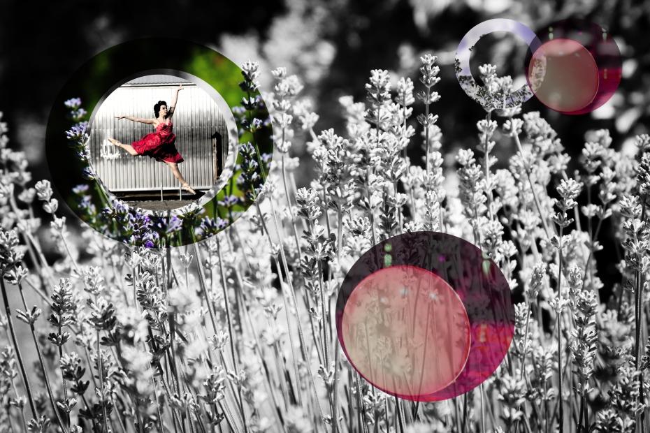 lavender C.jpg